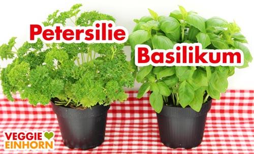 Frische Kräuter - Petersilie und Basilikum