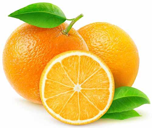 Zwei Orangen und eine Orangenscheibe