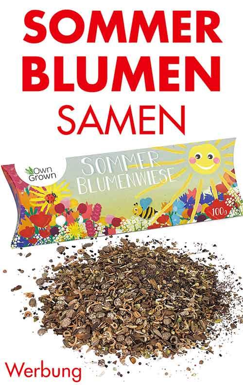 Sommerblumen Samen
